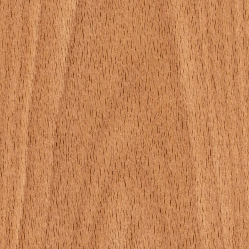 European Beech (Crown Cut)